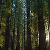 Tall Trees Capture Last Light