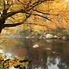 Autumn Beech and Misty River