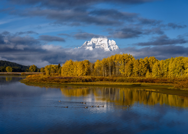 Geese in front of Mt. Moran at Oxbow Bend, Grand Teton National Park, Wyoming