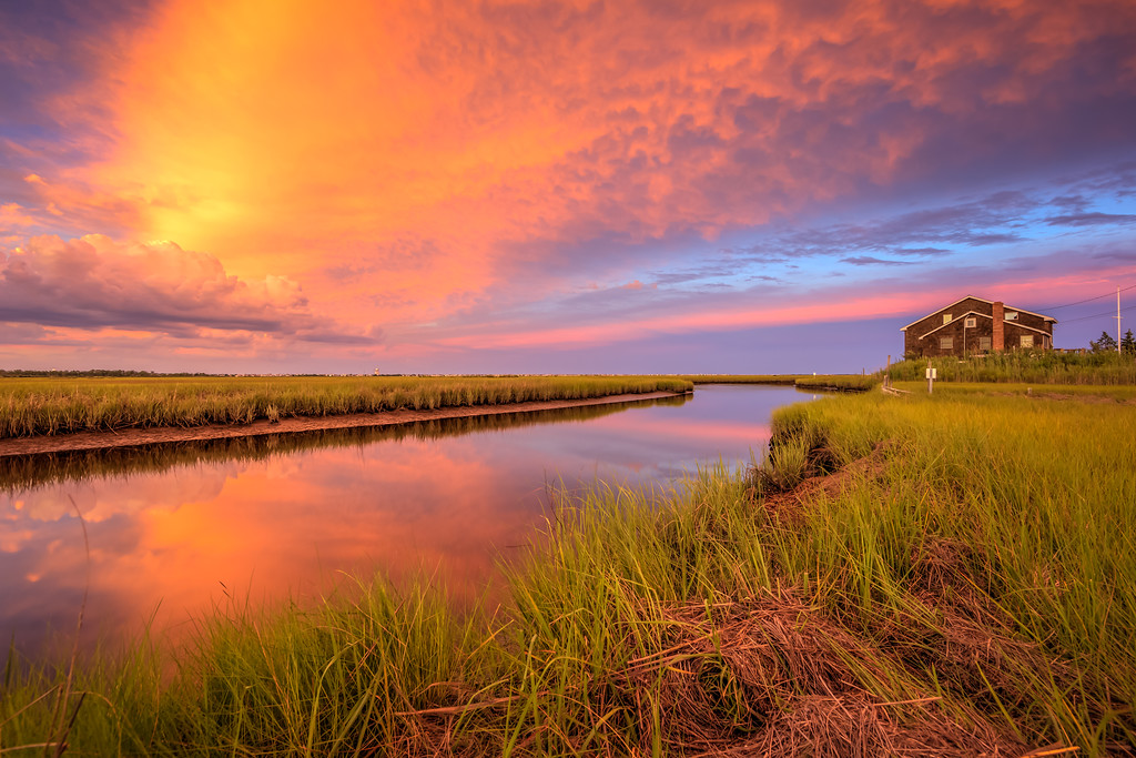 A Marsh Life