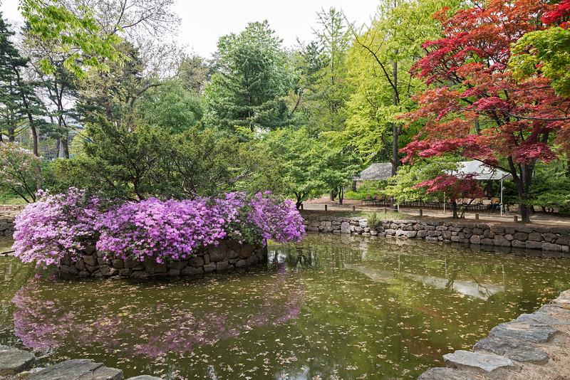 Colors in Korea