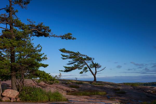 The Killbear Tree