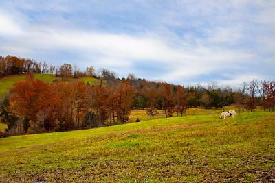 MIssouri Ozarks Hillside
