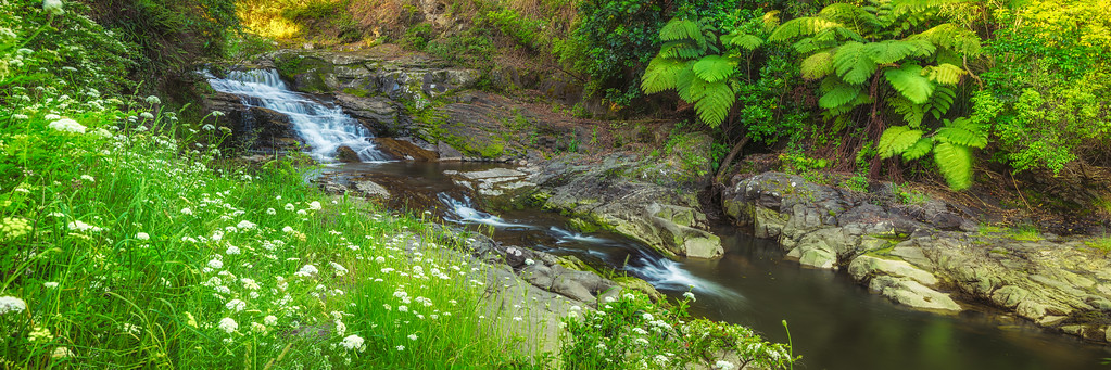 Spring at Matakana Falls