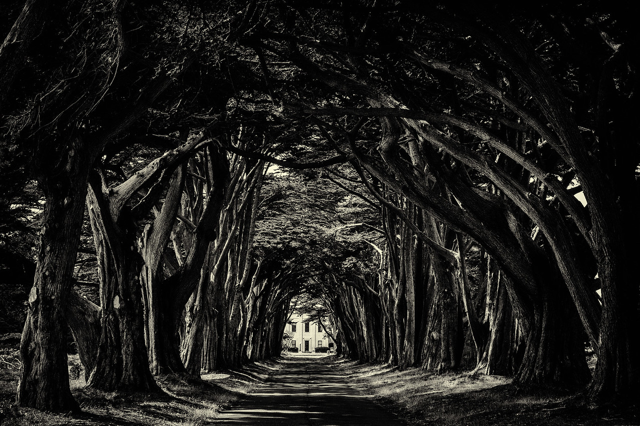 The Famous Tree Tunnel