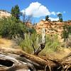 Zion National Park, USA