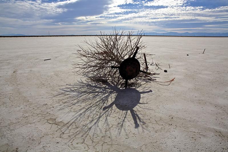 Christmas Tree #1.  Bonneville Salt Flats, Utah.