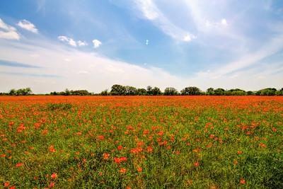 Spring in Whitney Texas