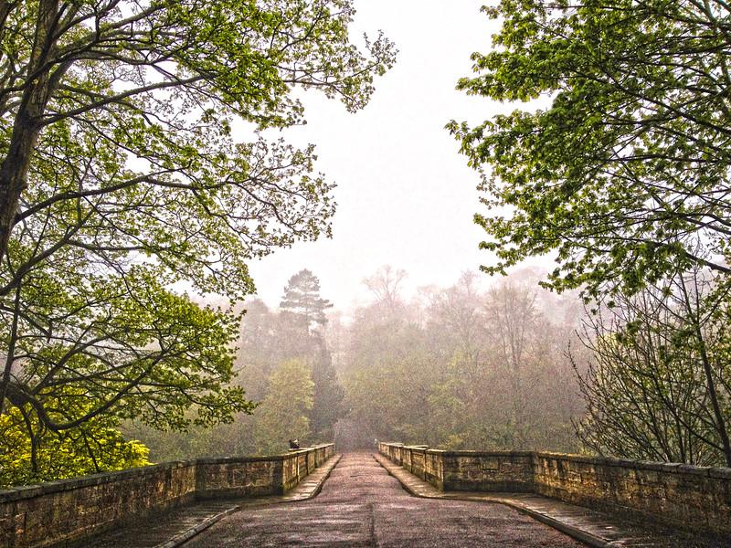 Forrest Mist,  Durham,  UK