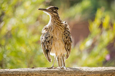 Road Runner on Guard