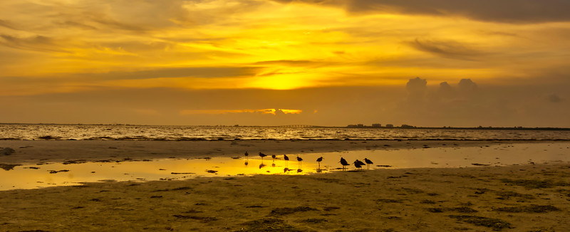 sandpipers at sundown