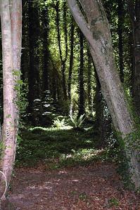 Rostellan Wood