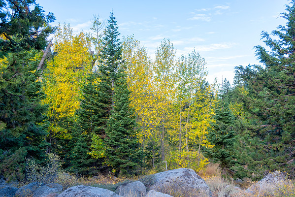 Deadman Creek Morning Fall Colors - Sonora Pass-2