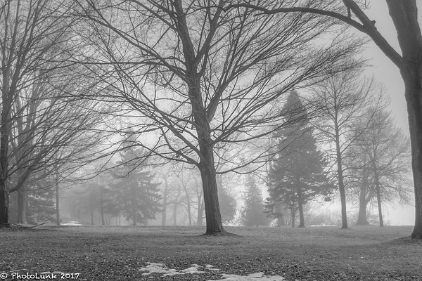 Lake Ontario Trees