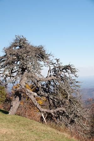 The Tree laurel Know Overlook