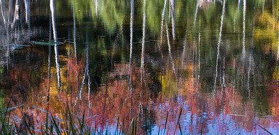 Autumn reflection in beaver pond