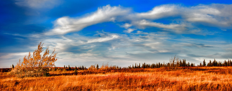 <a>Windswept birch trees seem to toss clouds over Beaver Dam Trail.  Autumn, Dolly Sods WV, 2012</a>