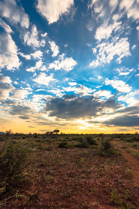Madikwe Sunset, Portrait