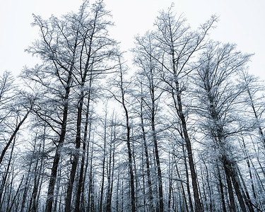 Forest ¶∑oodland