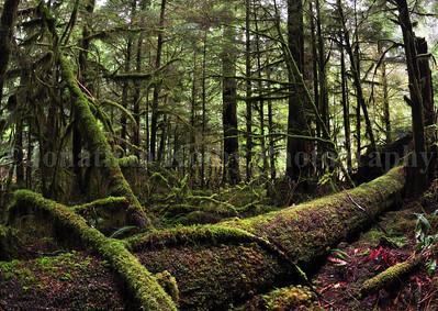 Prehistoric Forest of Middle Fork, Washington