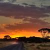 Driving Into the Sunrise in Amboseli National Park, Kenya