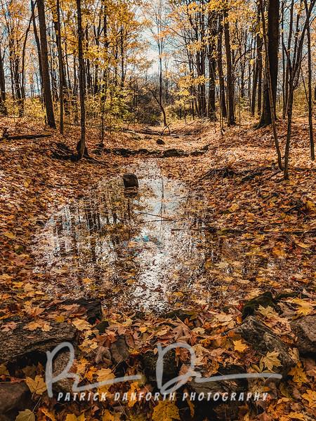 Creek Fall 2018