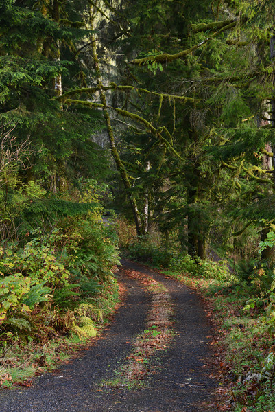 Tillamook State Forest, Oregon