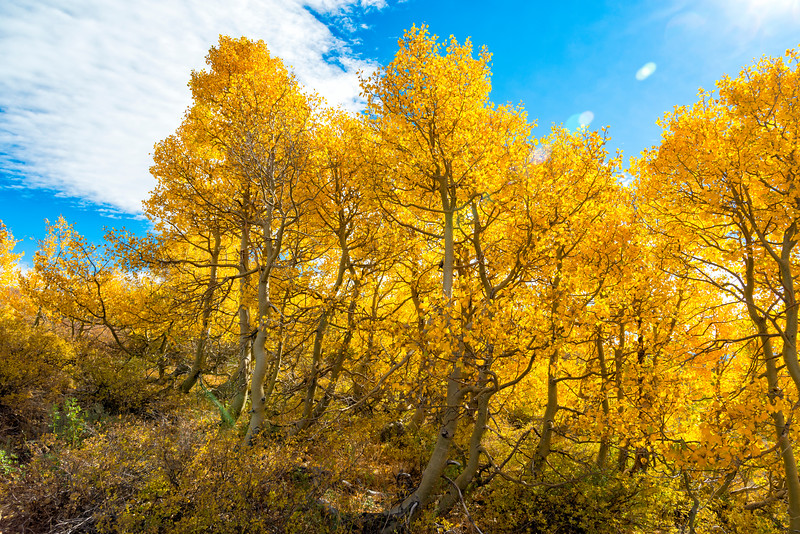 Fall Colors - Sonora Pass-5