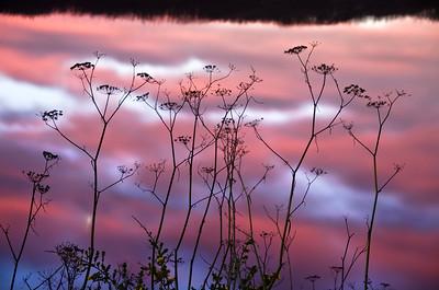 Gualala River & Reeds, California