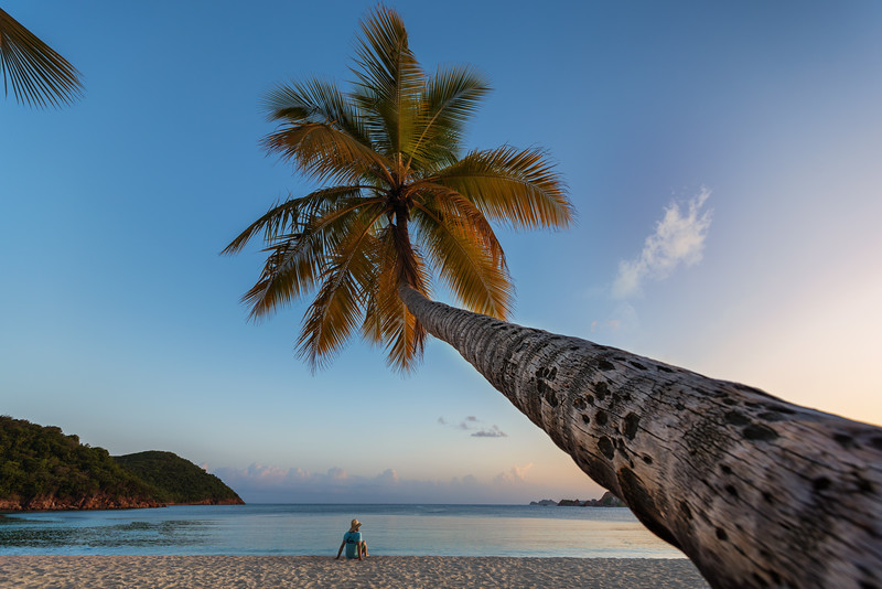Palm at Lindbergh Bay, St Thomas USVI