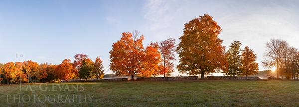 Morning Fall Light