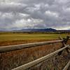 Storm Over Wheat Farm.  Near Bozeman, Montana