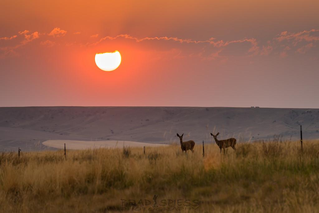 Sharing a Sunset