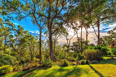 Sunrise at Tamborine Mountain through the trees.