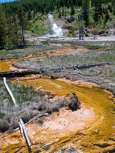 Yellowstone Vacation - Norris Geyser Basin area