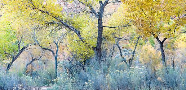 Boulder, Utah fall scene