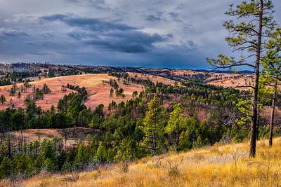 Field & Prairie, Custer State Park
