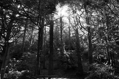 Oregon Coastline Forest