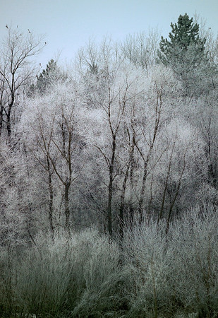 Morning Frost - Leslie, Michigan