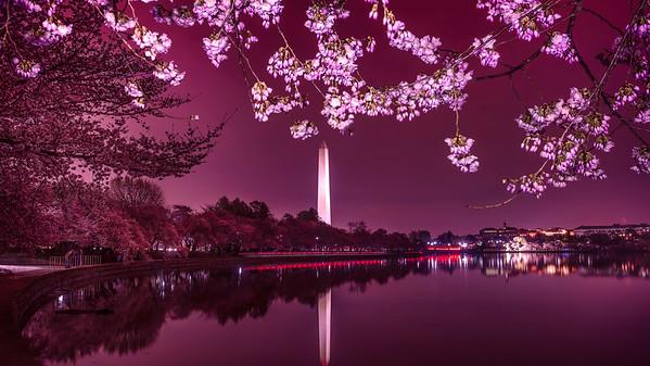 The Washington Monument at Night