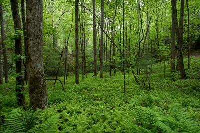 Spring Woodland in North Georgia