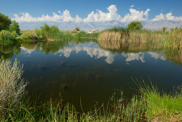 Farm Pond Reflection