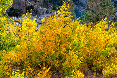 Deadman Creek Fall Colors - Sonora Pass-3