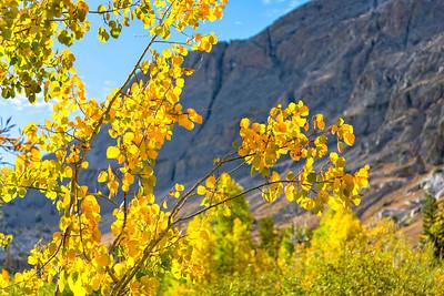 Deadman Creek Fall Colors - Sonora Pass-9