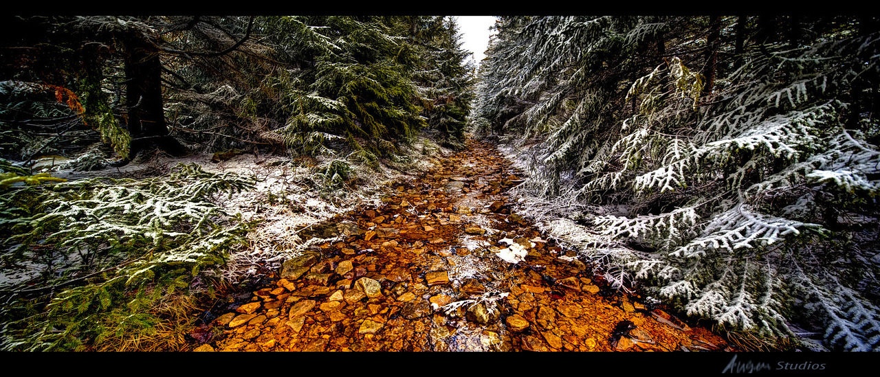 Clear Stream in Winter, Dolly Sods North, January 2012