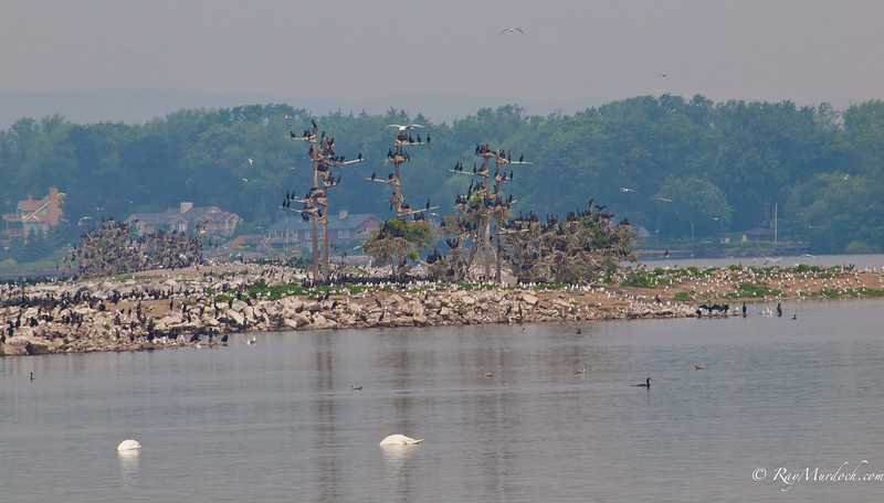 This is a small island in Burlington Bay.  Let's call it bird island.