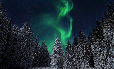 Alaska winter 2018 forest northern lights aurora stars night long exposure color