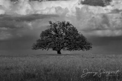Stormy Day in Mason County