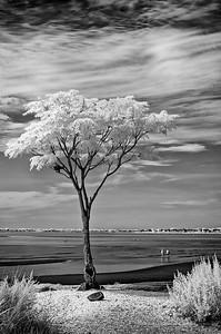 Silver Sands September
