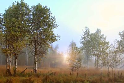 Afton Wyoming Autumn Morning